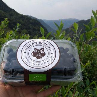 tarrina de 500 g de arandanos ecologicos